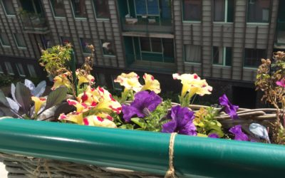 7 Ways to Benefit from Nature in the City